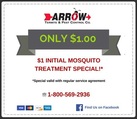 offer-mosquito