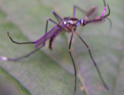 Pest Control Tick Control Termite Inspection Mosquito Control Mosquito