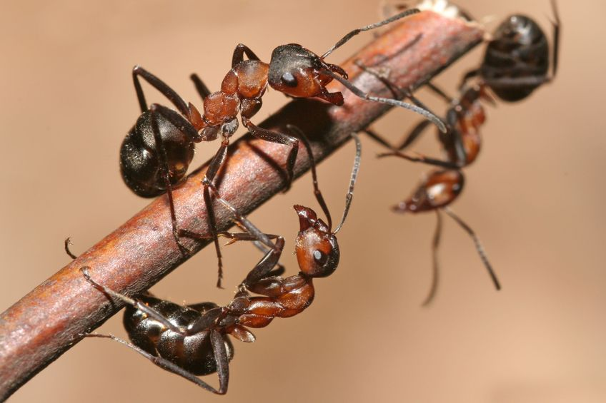 8 Ways To Prevent Ants From Entering Your House