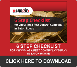 5 Warning Signs of a Rodent Problem - Arrow Termite and
