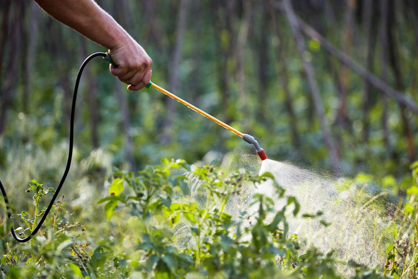 What Does Green Pest Control Mean