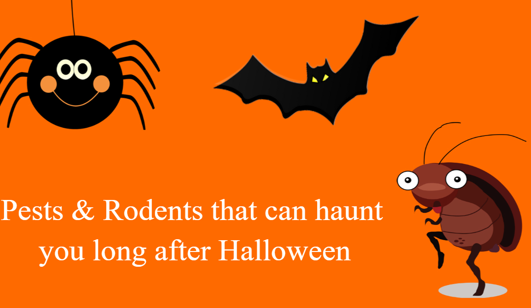 Avoid Creepy Crawly Pests and Rodents This Halloween