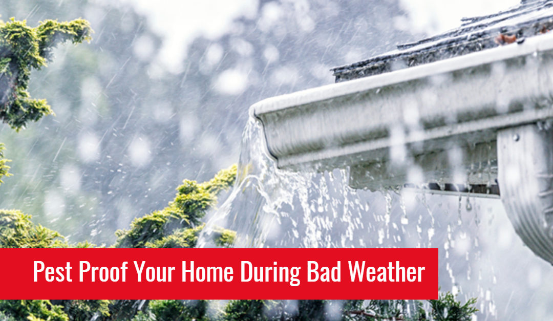Tips to Keep Your Home Safe from Pests During Storms