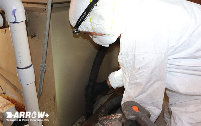 rodent control sanitation and removal baton rouge la