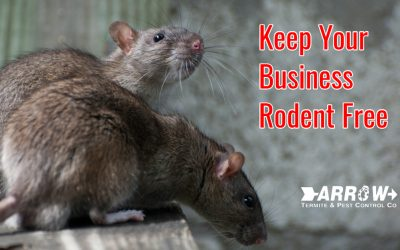 How to Keep Your Business and Place of Work Rodent Free